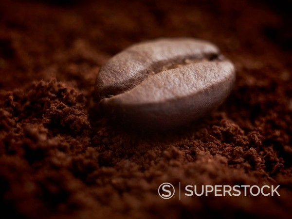 Close up of coffee bean on ground coffee : Stock Photo