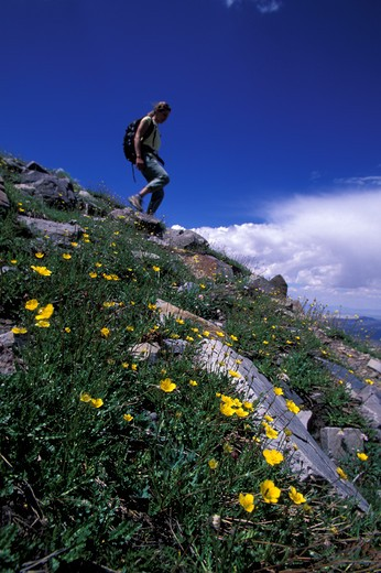 A woman hiking down a flower covered slope in Great Basin NP in Nevada (Low Angle Perspective) : Stock Photo