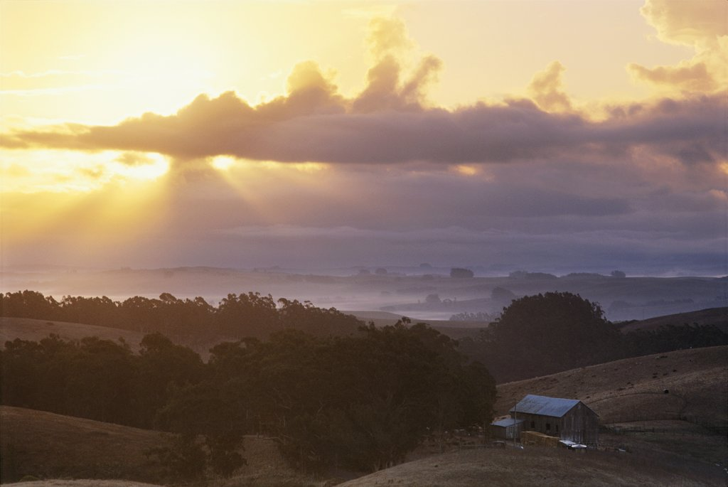 God beams over sheep farm in Sonoma County, California : Stock Photo