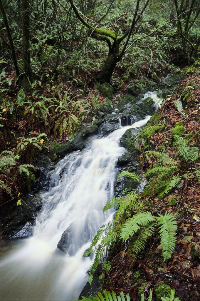 Cascade in California's Coast Range : Stock Photo