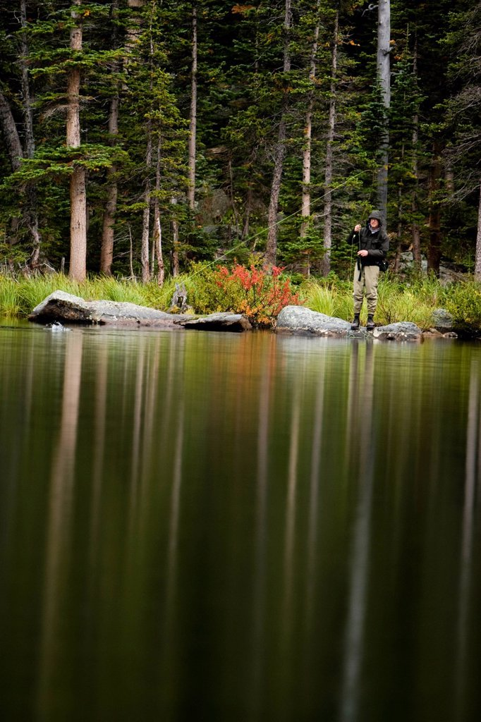 A senior man fly fishes in the backcountry on an overcast day, and catches Greenback Cutthroats at a lake in Colorado. : Stock Photo