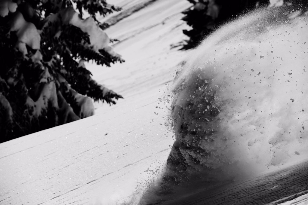 A snowboarder rips untracked powder turns in Colorado. : Stock Photo