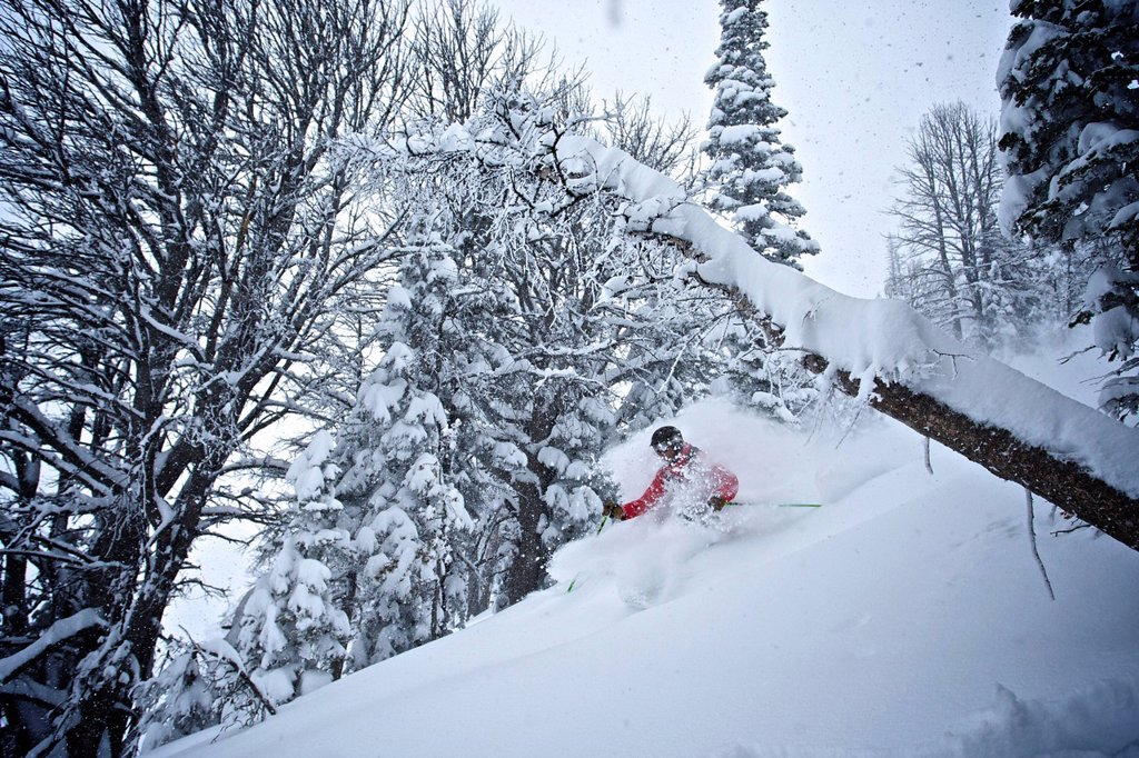 Stock Photo: 1778R-16378 A man skis in powder snow on Teton Pass.