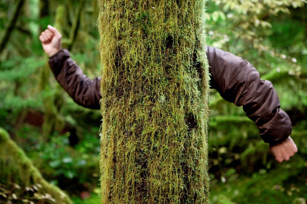 Mossy tree with a mans arms. : Stock Photo