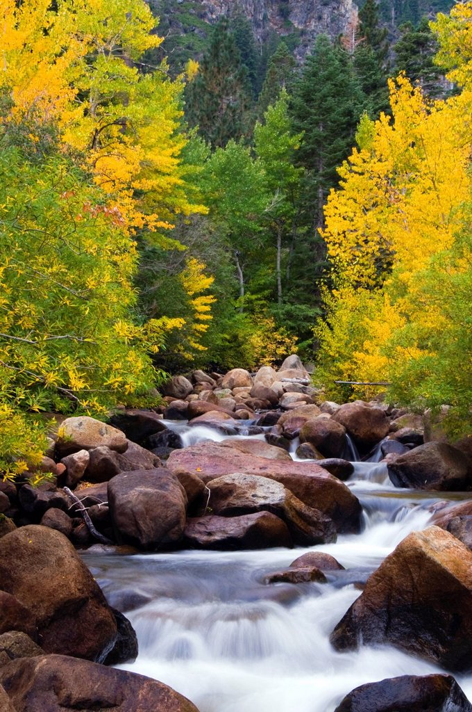 Stock Photo: 1778R-25319 The west fork of the Carson River is alive with fall color outside of Markleeville, CA.