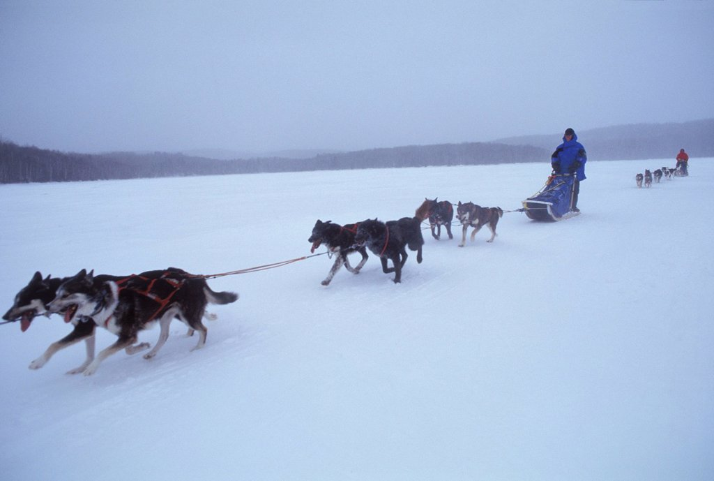 Stock Photo: 1778R-2953 Dog sledding across frozen lake.
