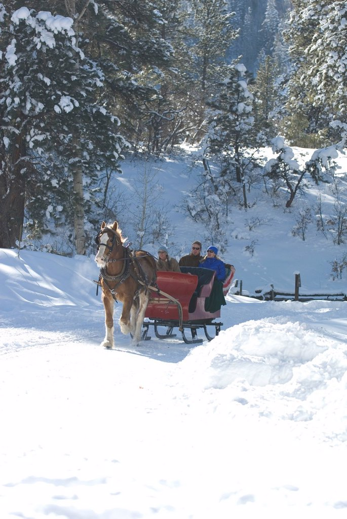 Three people riding sleigh. : Stock Photo