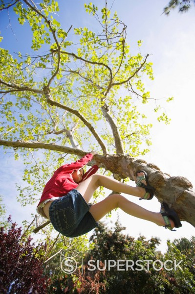 A young girl climbs a tree on a spring afternoon, Mission Viejo, California. : Stock Photo