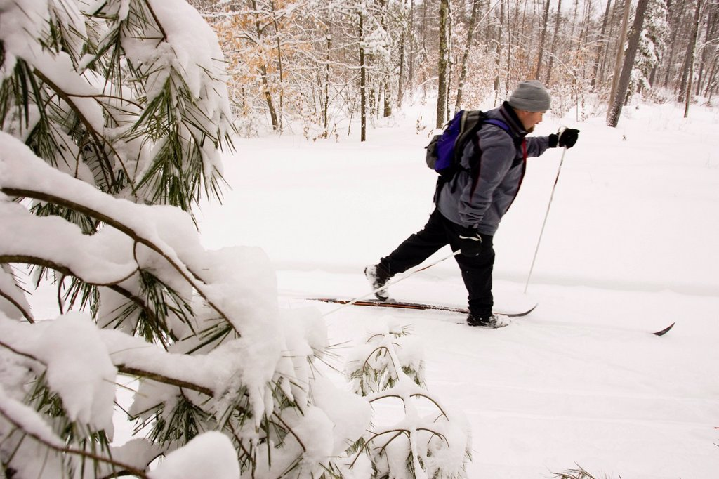 A man Cross Country Skiing in Dayton, Maine. : Stock Photo