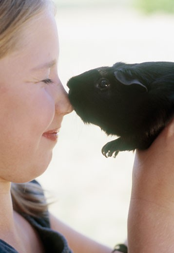 Stock Photo: 1779R-19111 Young girl touching nose with guinea pig