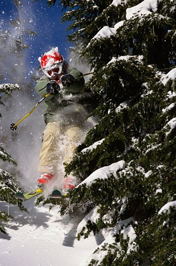 Back-country skier between trees : Stock Photo