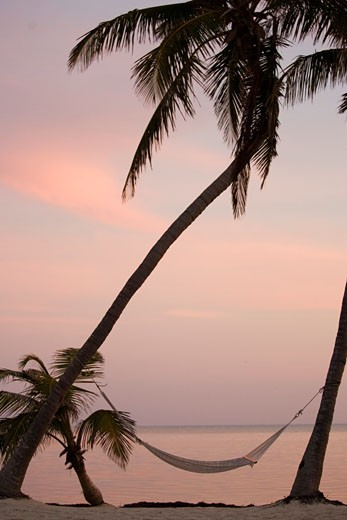 Palm tree at the beach, Islamorada, Florida : Stock Photo
