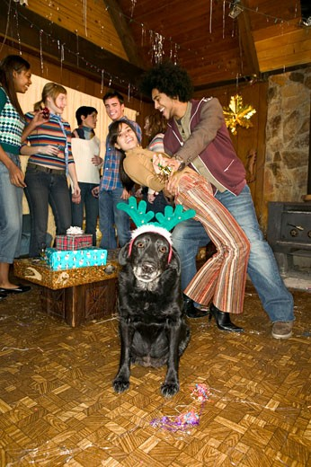Dog wearing reindeer costume at Christmas party : Stock Photo
