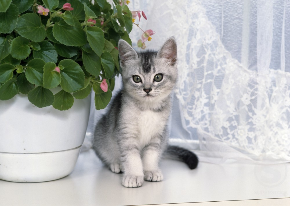 Stock Photo: 178-550 Kitten sitting on window sill