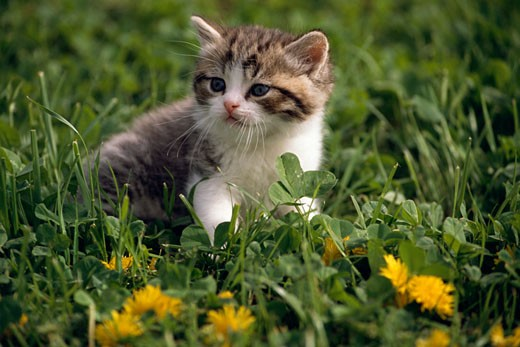 Kitten sitting in grass and looking away : Stock Photo