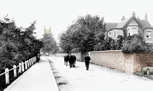 East Grinstead, Lewes Road 1907 : Stock Photo