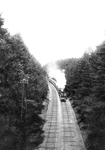 Witley, Pine Woods Railway 1908 : Stock Photo