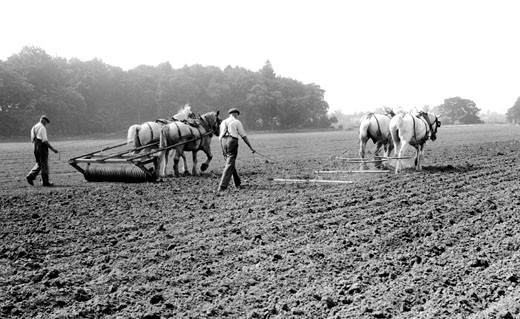 Milford, Farming c1955 : Stock Photo