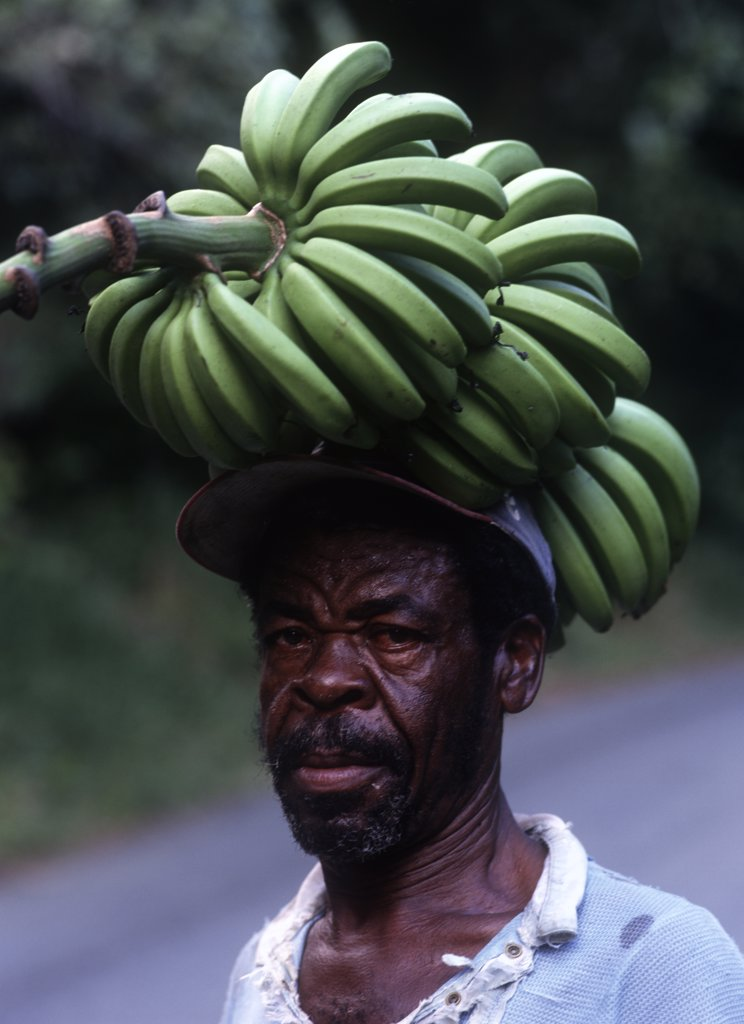 Stock Photo: 1783-16044 Man carrying large bunch of bananas home in the evening , Islington, Jamaica.