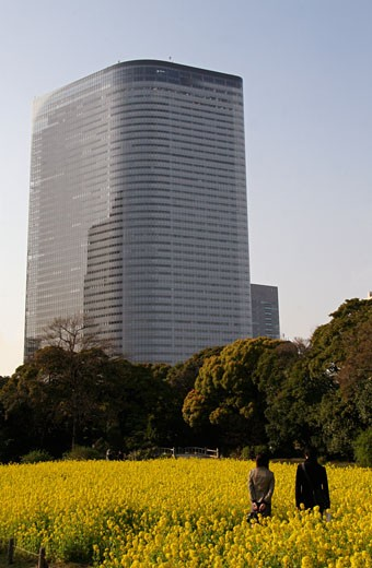 The Shiodome business district seen from Hamarikyu Gardens , Tokyo, Japan  : Stock Photo