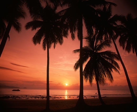 Tropical beach at sunset, Johar State, Malaysia. : Stock Photo