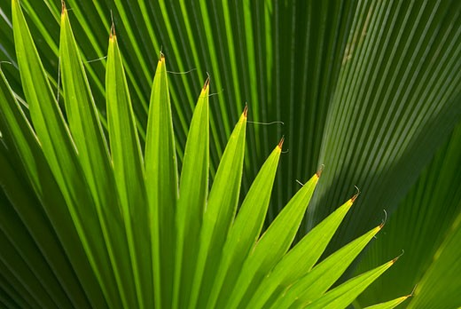Stock Photo: 1783-1928 Leaf, Grenada