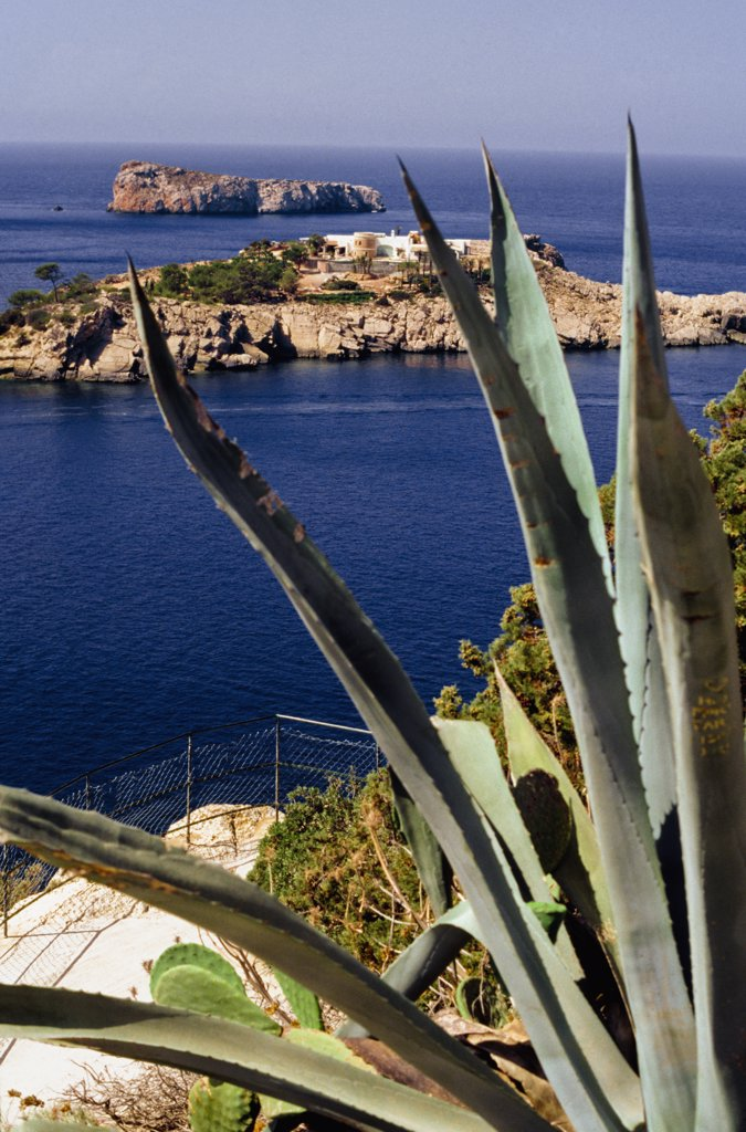 Exotic plants at Ibiza coastline in Balearics, Ibiza, Balearic Islands, Spain. : Stock Photo
