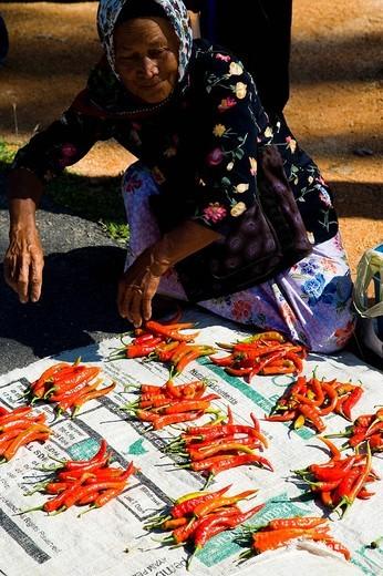 Kampung Penarek, Terengganu, Malaysia : Stock Photo