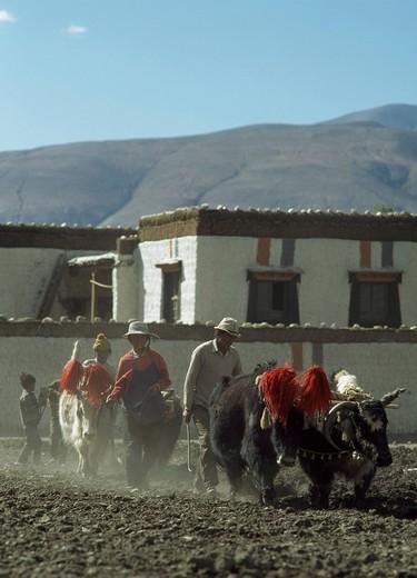 Lhartse, Tibet. : Stock Photo