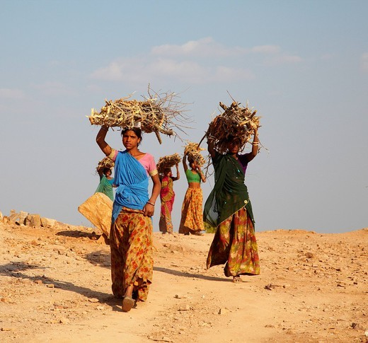 Group Of Women Carrying Firewood Near Bijaipur , Bijaipur, Rajasthan, India. Group Of Women Carrying Firewood Near Bijaipur : Stock Photo