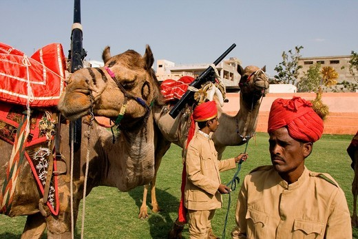 Stock Photo: 1783-31501 Camels Used In A Parade At Elephant Festival, Jaipur,Rajasthan State, India. Asia. Camels Used In A Parade At Elephant Festival