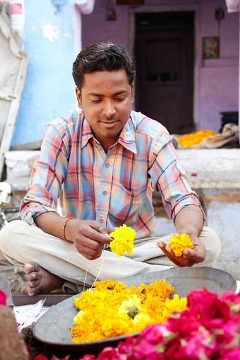 Man Making Maragold Garland Blue Town In Jodphur , Jodphur Rajasthan India. Man Making Maragold Garland Blue Town In Jodphur : Stock Photo