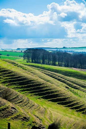Terracing cut into the hillside.Vale of The White Horse, Oxfordshire, UK. Terracing cut into the hillside. : Stock Photo