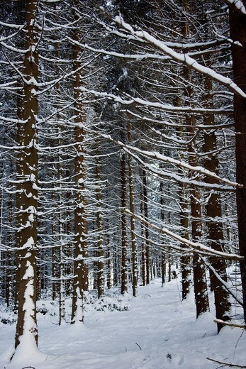 Forest of Marburg in winterMarburg, Germany. Forest of Marburg in winter : Stock Photo