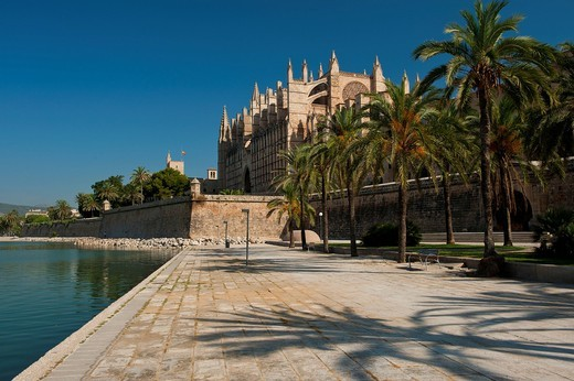 Palm trees in the Parc de la Mar leading to Palma CathedralPalma, Majorca, Spain. Palm trees in the Parc de la Mar leading to Palma Cathedral : Stock Photo