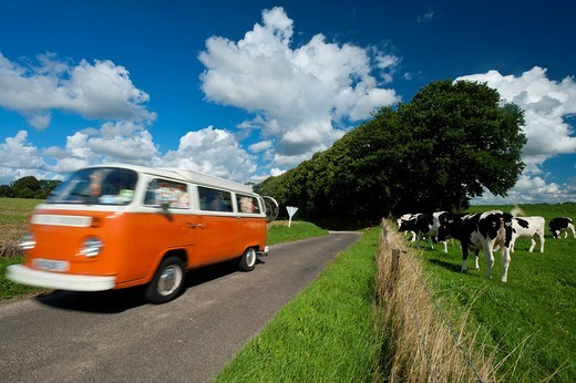 Campervan driving past field of cowsNormandy, France. Campervan driving past field of cows : Stock Photo