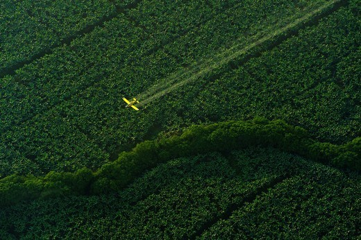 Crop dusting plane flying over banana fields early in the morning near the Caribbean coast of Costa RicaCosta Rica. Crop dusting plane flying over banana fields early in the morning near the Caribbean coast of Costa Rica : Stock Photo