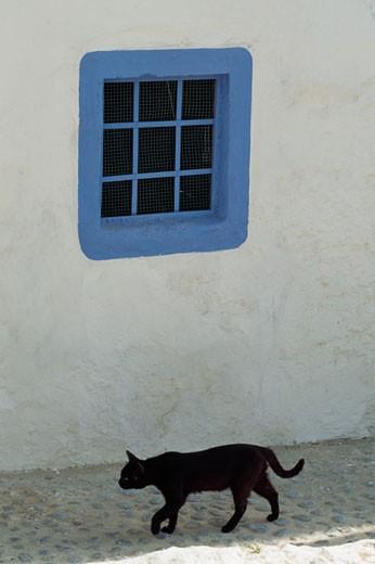 Cat and blue window,  Ibiza, Spain : Stock Photo