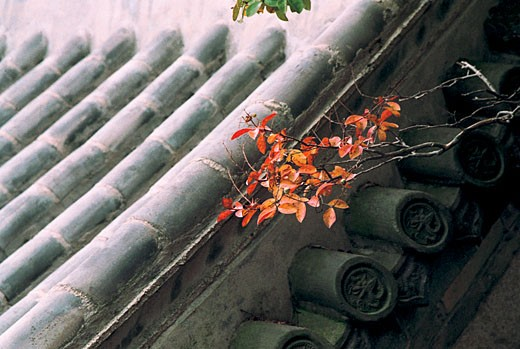 Stock Photo: 1787R-1197 Bamboo rooftop of an old house, Qingdao City, Shandong Province of People's republic of China