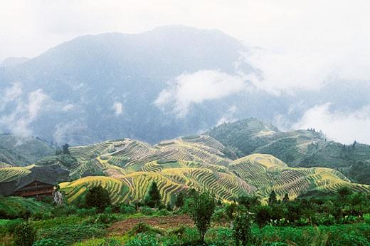 Longji Terraces, Longji, Longsheng County, Guilin City, Guangxi Zhuang Nationality Autonomous Region of People's Republic of China : Stock Photo