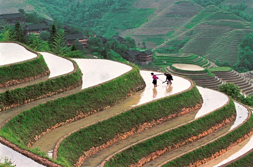 Stock Photo: 1787R-1679 Yao minority people break ground in the terraced fields in Longji mountain, Longsheng County, Guilin City, Guangxi Zhuang Nationality Autonomous Region of People's Republic of China,