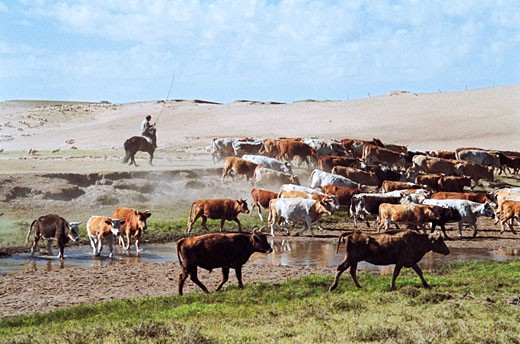 Stock Photo: 1787R-2046 Herdsman with cattle on grassland of Gonggeer Prairie, Keshiketengqi, Chifeng City Inner Mongolia Autonomous Region of People's Republic of China,