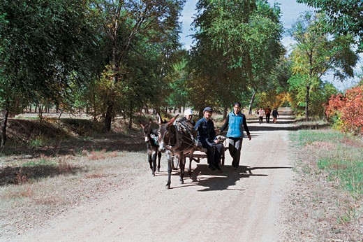 Men traveling in donkey cart, Guyuan County, Hebei Province of People's Republic of China, : Stock Photo