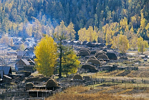 Stock Photo: 1787R-2345 Pile of hay on wooden structures, Baihaba Village, Habahe County, Xinjiang Uygur Autonomous Region of People's Republic of China