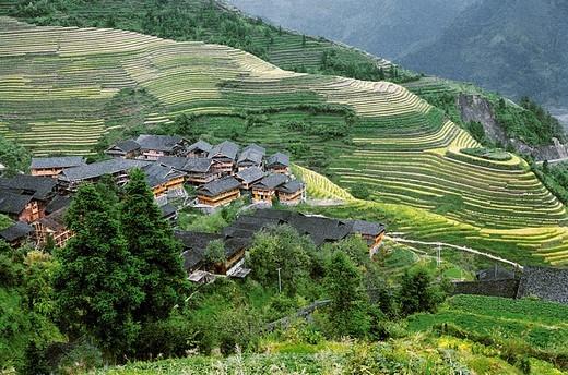 Elevated view of Longji Terraces, Longji, Longsheng County, Guilin City, Guangxi Zhuang Nationality Autonomous Region of People's Republic of China : Stock Photo
