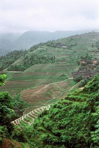 Stock Photo: 1787R-3381 Longji mountain terraced fields, Longsheng County, Guilin City, Guangxi Zhuang Nationality Autonomous Region of People's Republic of China