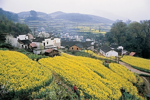 Stock Photo: 1787R-4039 Rural scenery of Jiangling Village, Wuyuan County, Jiangxi Province of People's Republic of China,