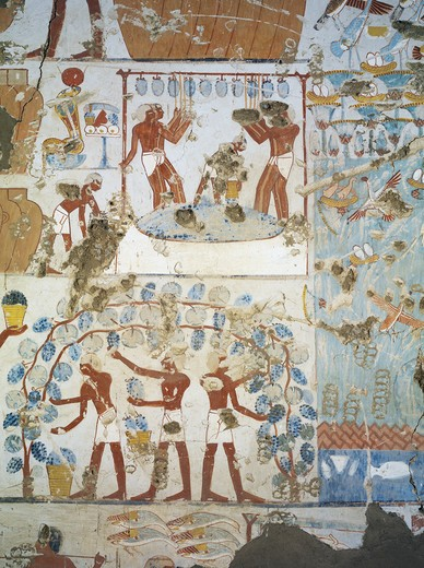Egypt, Thebes, Luxor, Sheikh 'Abd al-Qurna, Tomb of royal granary supervisor Menkheper, Mural paintings, Vine harvest and winemaking : Stock Photo