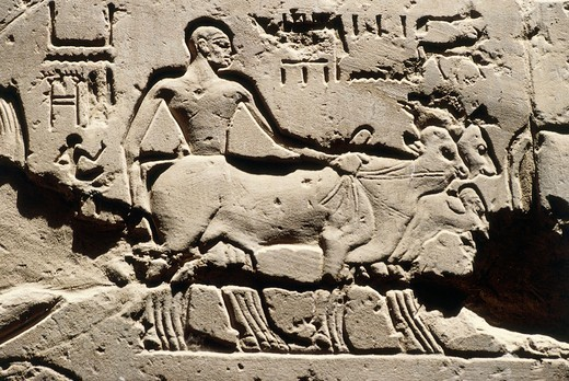 Egypt Ancient bes, Luxor, Luxor Temple, Courtyard of Ramses II, relief, New Kingdom, Dynasty XIX (1290-1224 B.C.) : Stock Photo