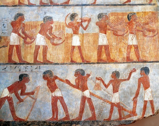 Wall painting depicting sowing and harvesting scene, from the tomb of Onsu at west Thebes, close-up : Stock Photo